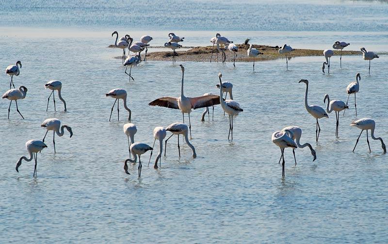 Fauna in Laguna - Foto di Filippo Battistella
